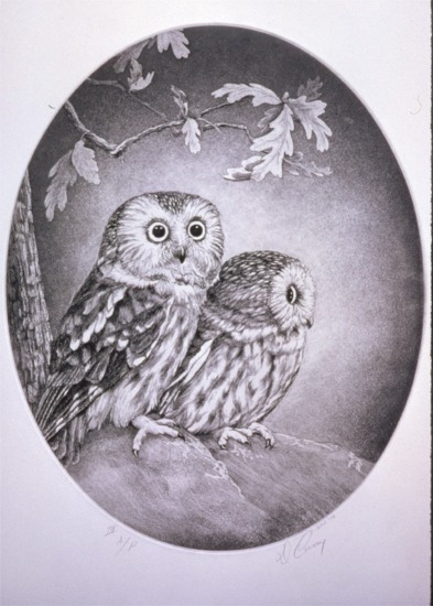 """""""Saw Whet Owls""""   by Dennis Curry"""