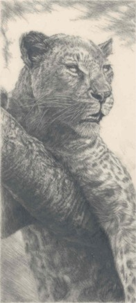 One of the pencil drawings on Mylar.