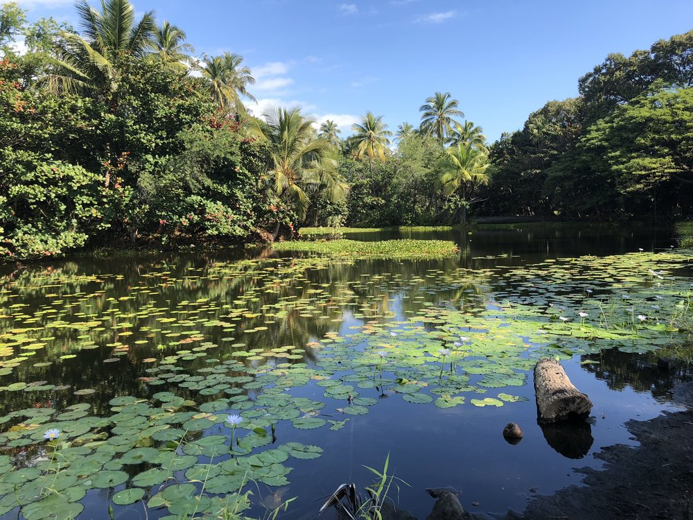 beautiful pond at Punalu'u beach - black sand beach, hawaii