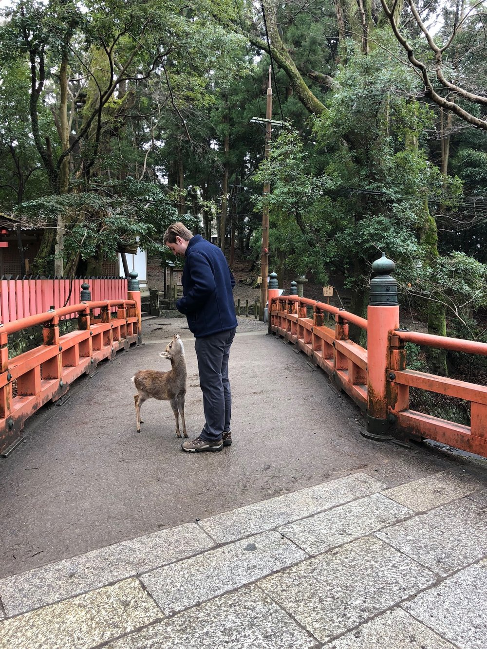 Man has a conversation with a cute baby deer in Nara, Japan