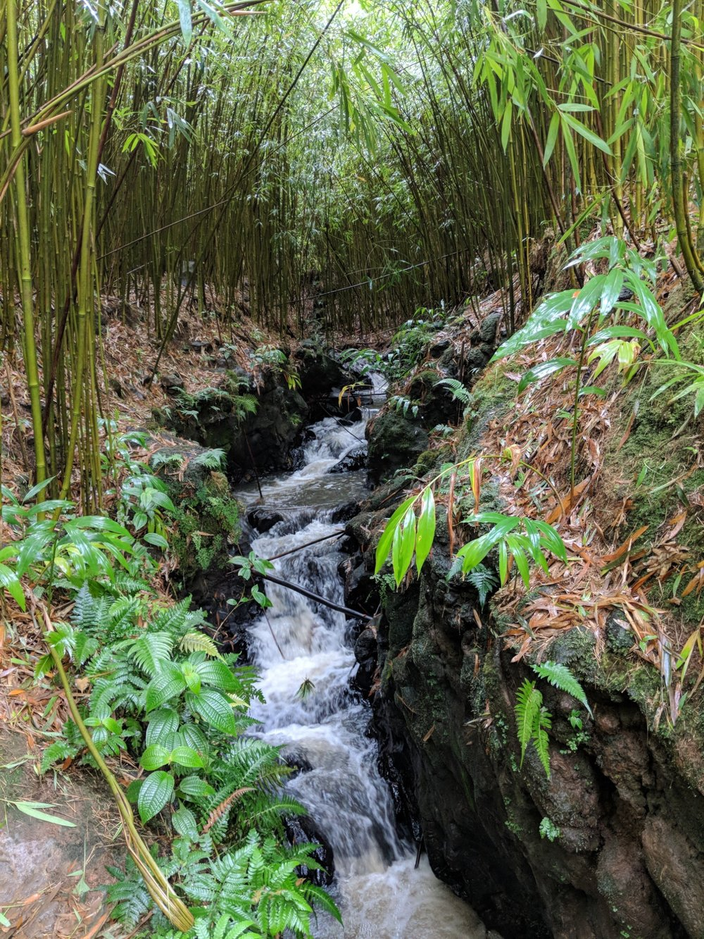 In the bamboo forest on the road to Hana, has a small stream that leads to the first waterfall.