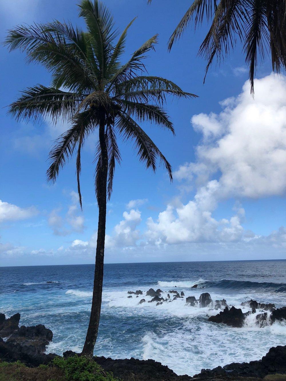 Photo of palm on the road to Hana, Maui.