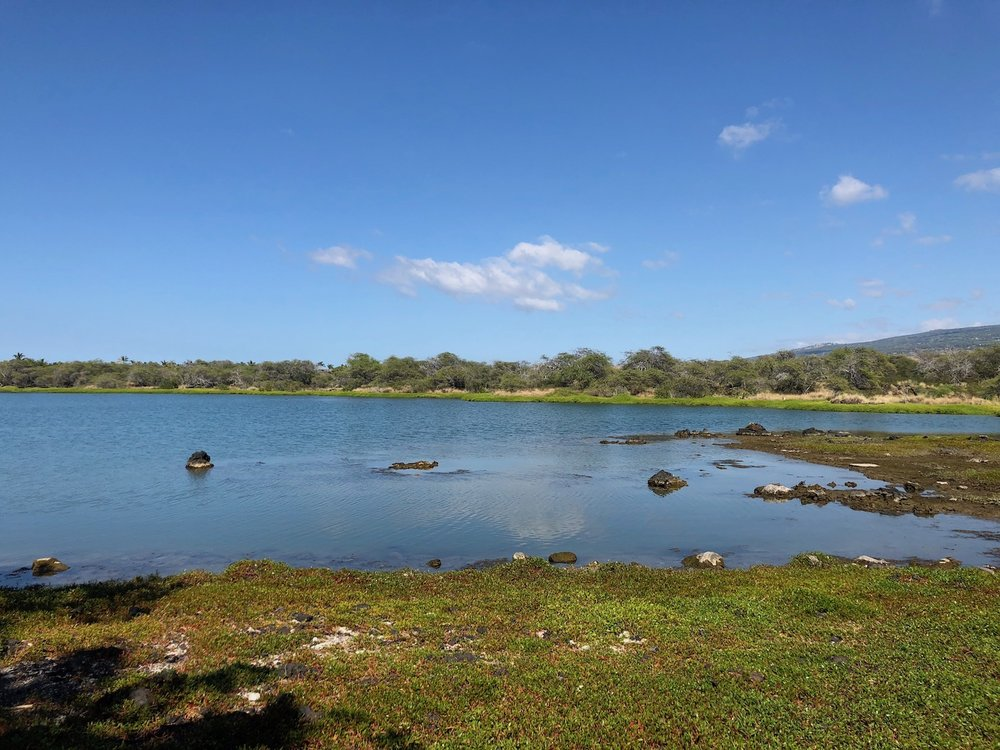 View of the Kings Ponds on Hawaii