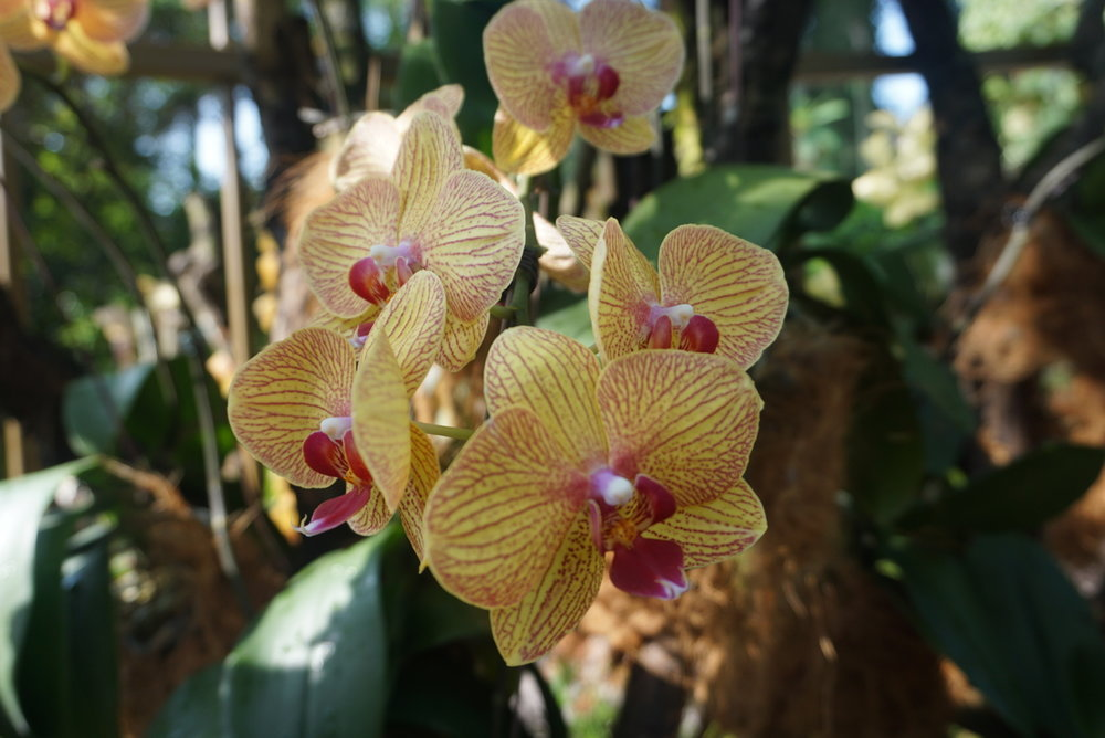 yellowandpinkorchids.jpg