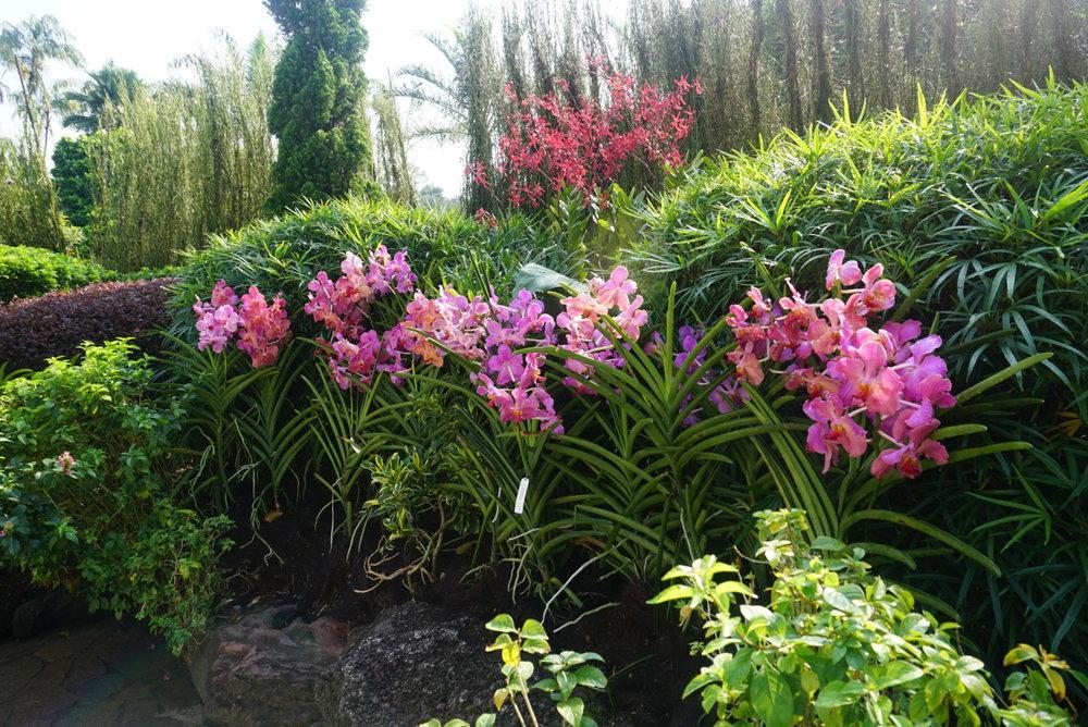 pinkorchids.jpg