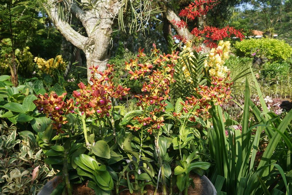 floralarrray.jpg