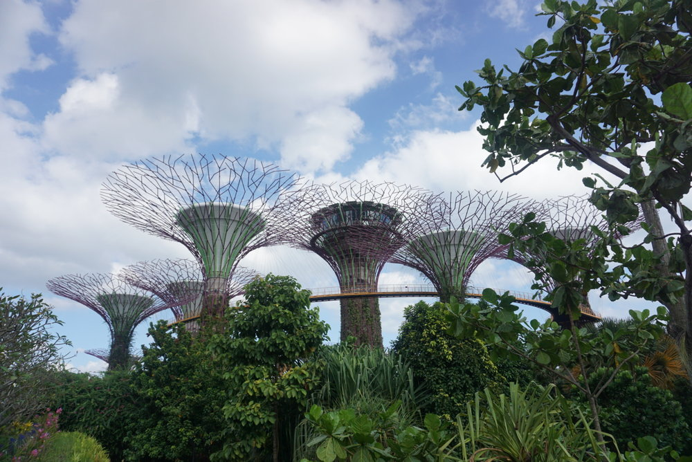 view of the super trees at the Gardens by the Bay from the Marina Bay Sands bridge. boldlygotravel.com