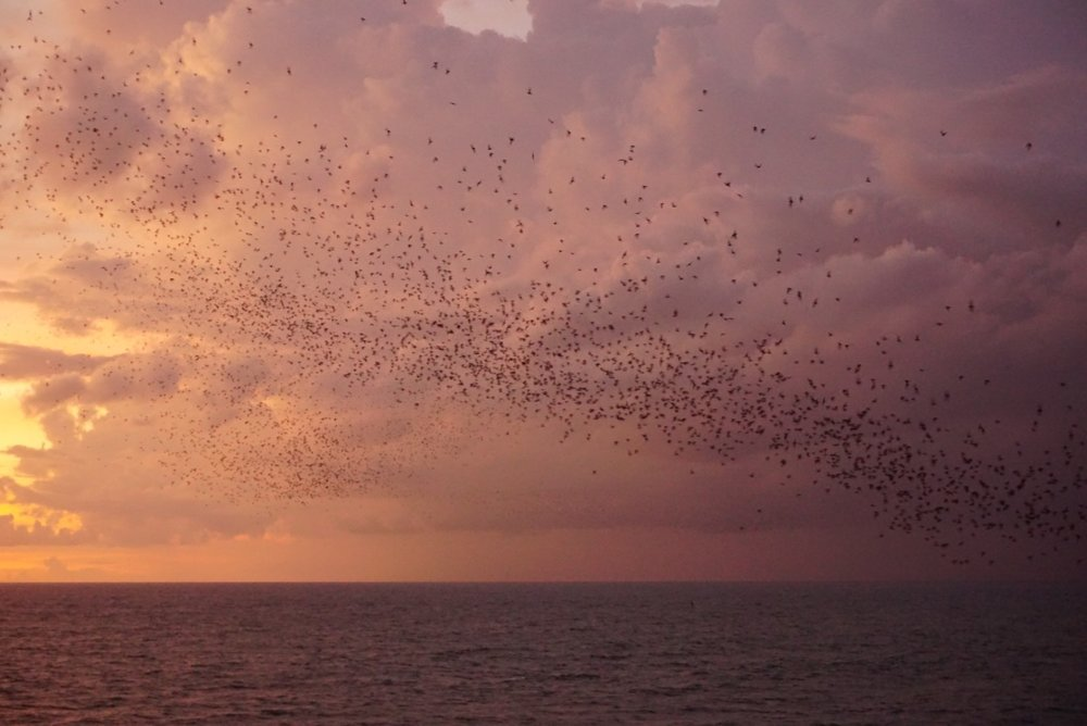 Bats flying out at Tanah Lot. Boldlygotravel.com
