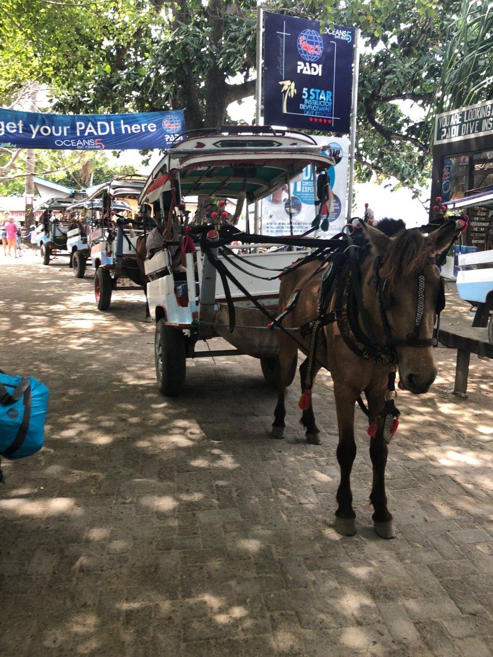 Horse drawn 'taaxi's' on Gili Air, Indonesia. boldlygotravel.com