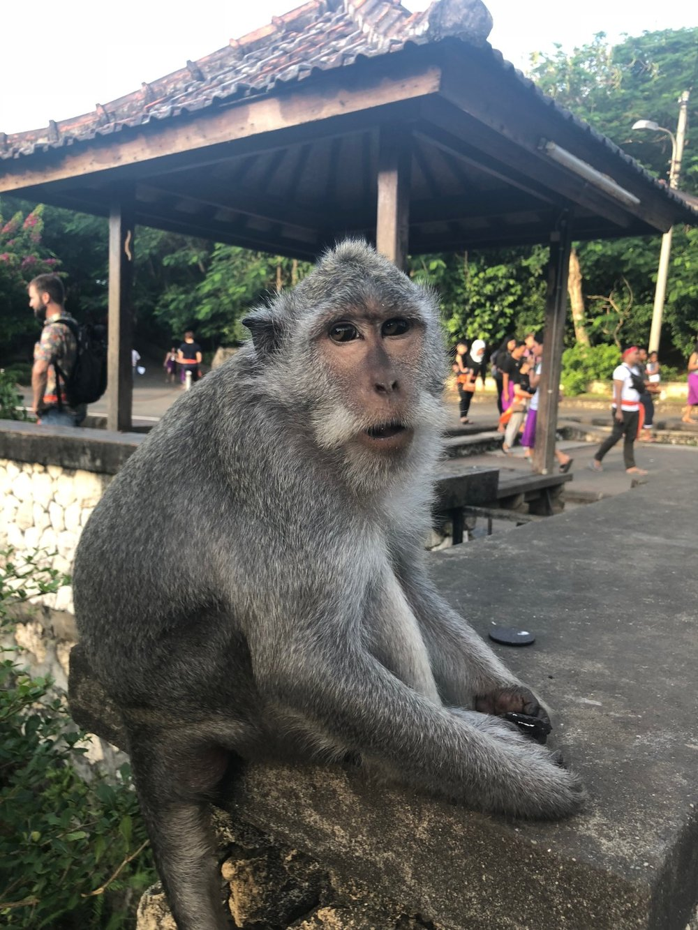 Monkey at the Uluwatu Temple, Bali. Boldlygotravel.com