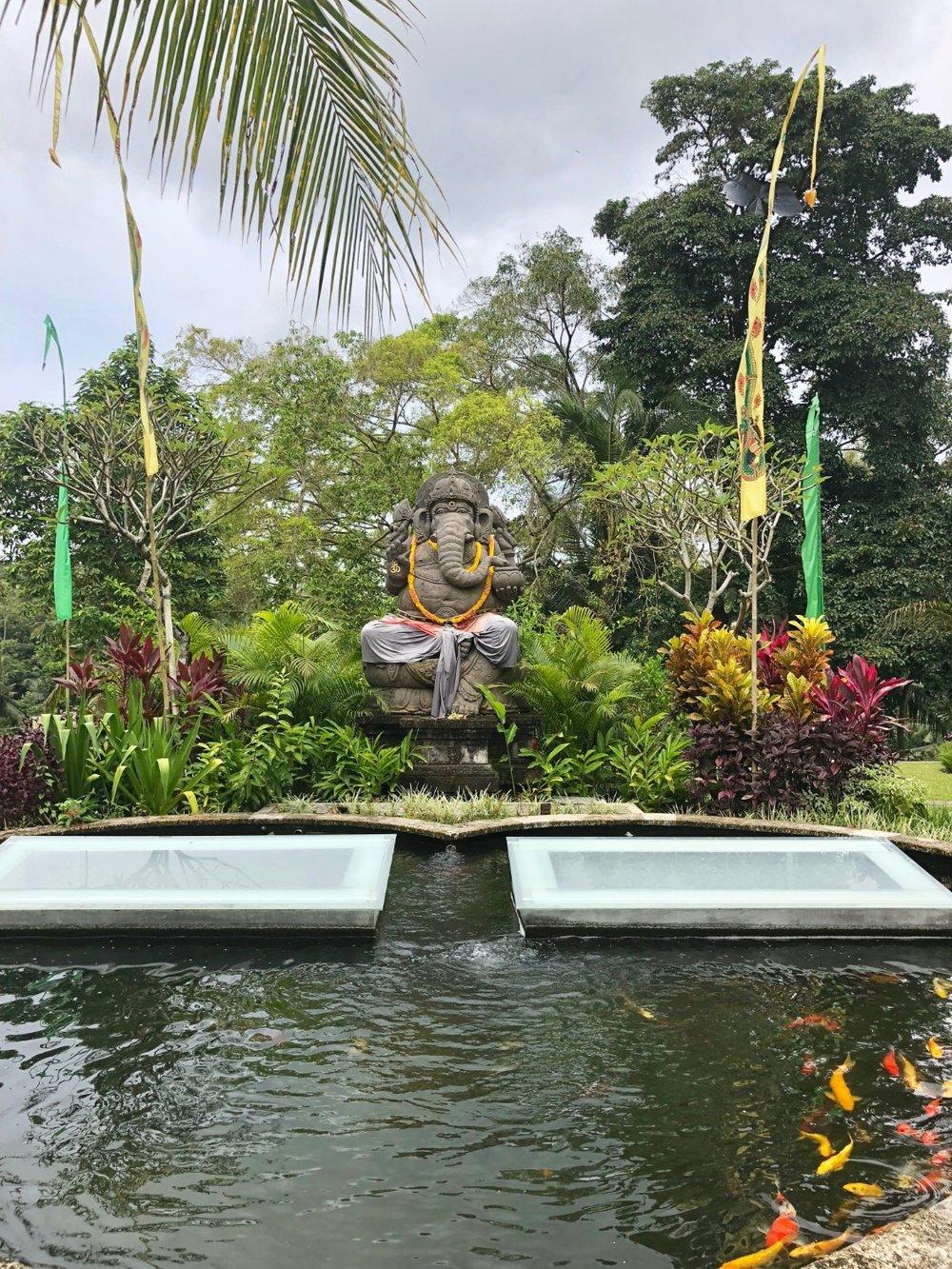 Ganesh hear shaped coy pond at local hotel in Ubud. Boldlygotravel.com