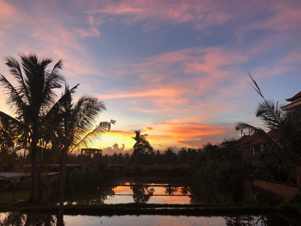 Bisma st. sunset on the rice feilds in Ubud, Bali. boldlygotravel.com