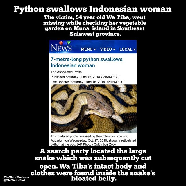 #snake #swallow #eaten #indonesia