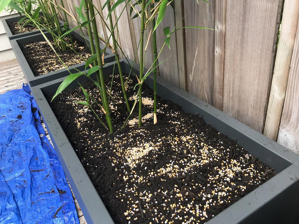 Bamboo6_w.jpg