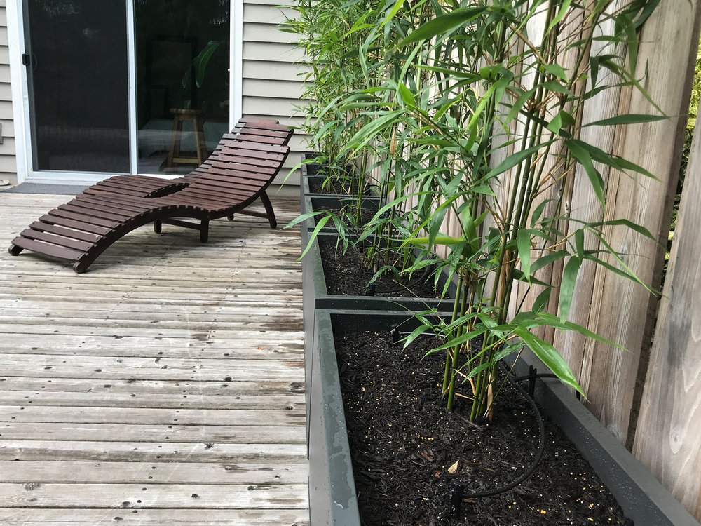 Bamboo9_w.jpg