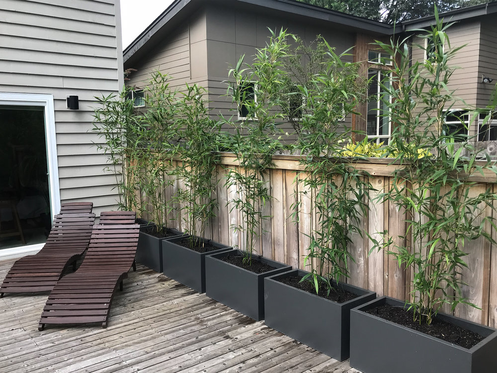 Bamboo Privacy Screening