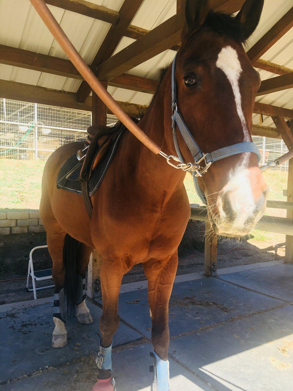 Sando-saddled.JPG