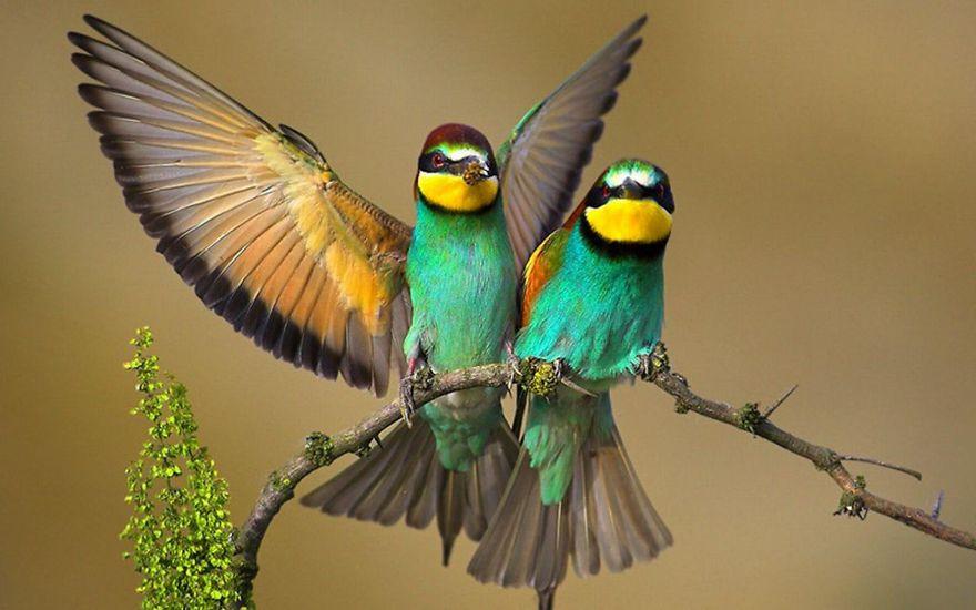 BirdCouple.jpg
