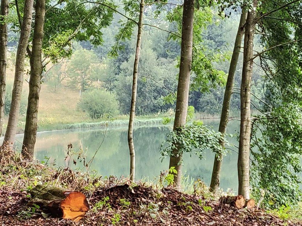 Lake morning silence.jpg