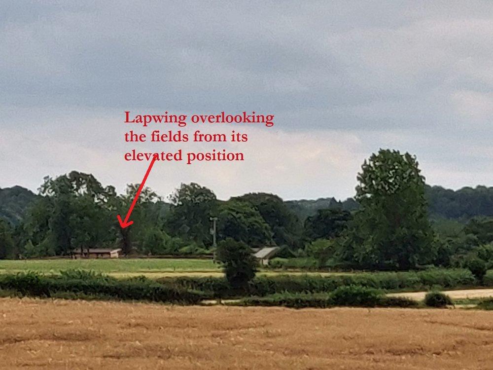 overlooking the fields.jpg