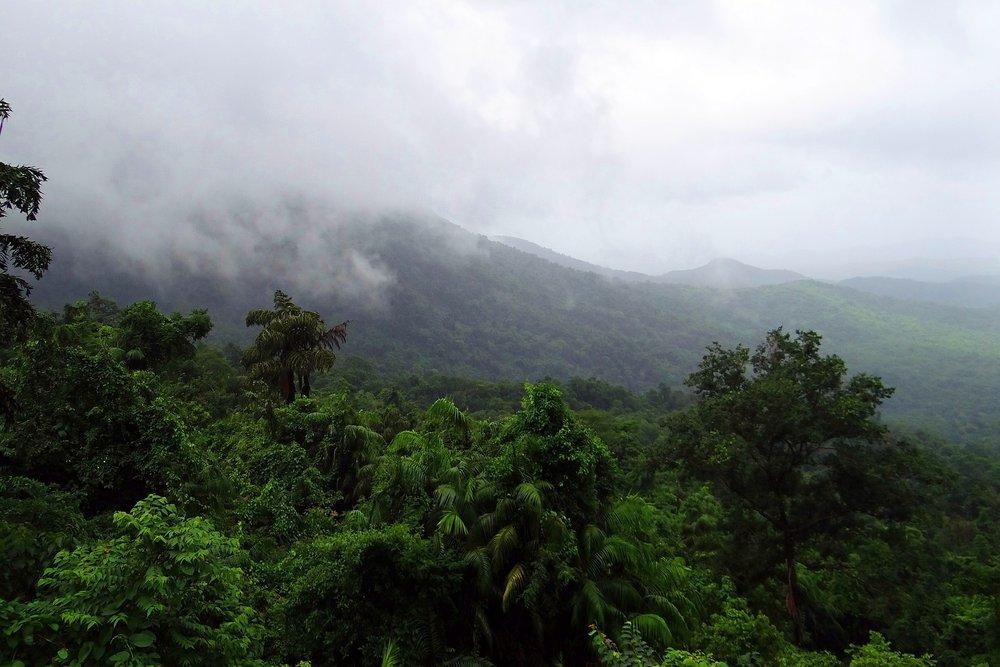 rainforest-384940_1920.jpg
