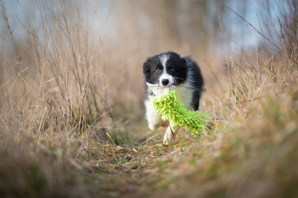 List-of-puppy-courses-that-build-agility-foundations-web.jpg