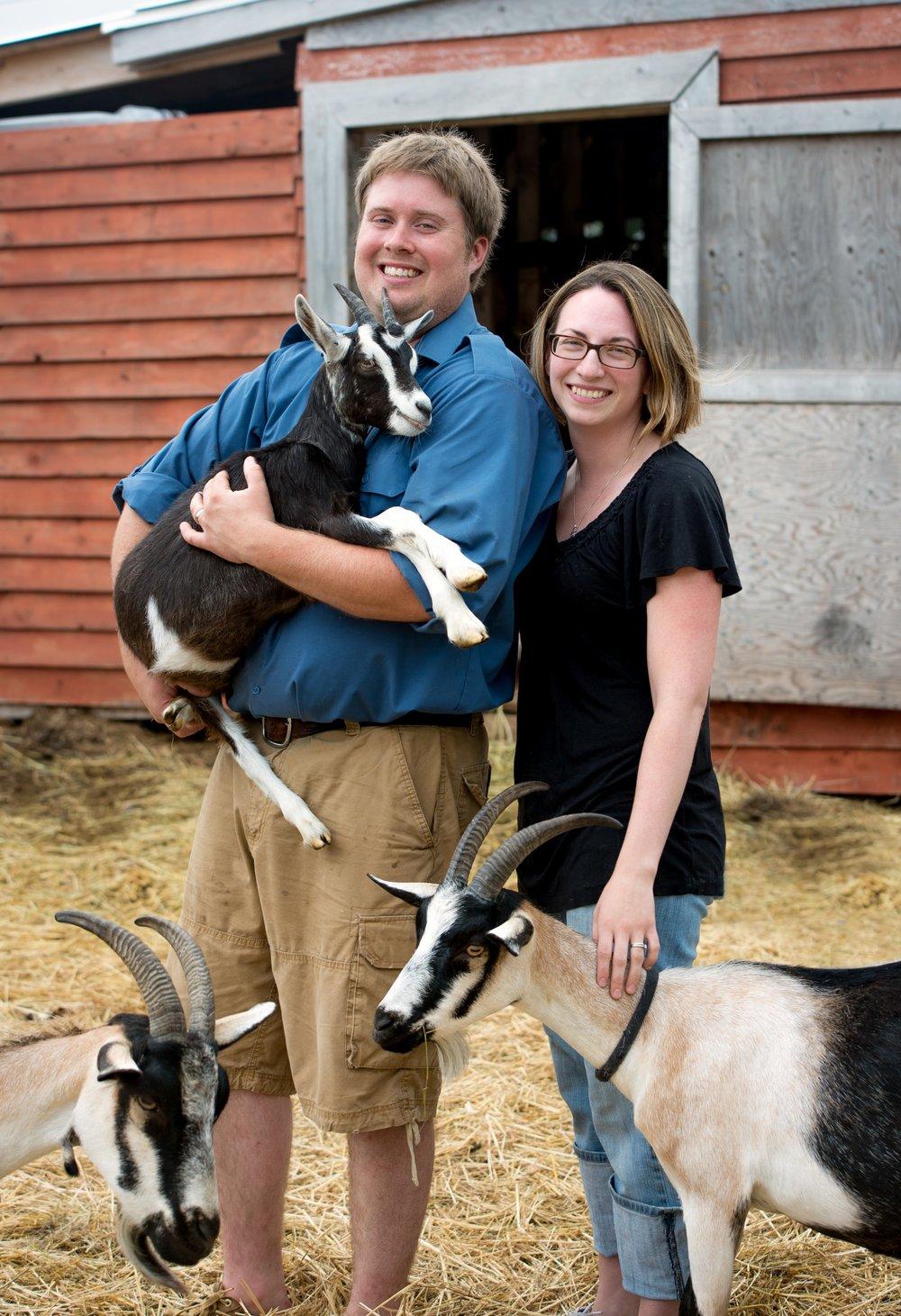 Groovy Goat 1