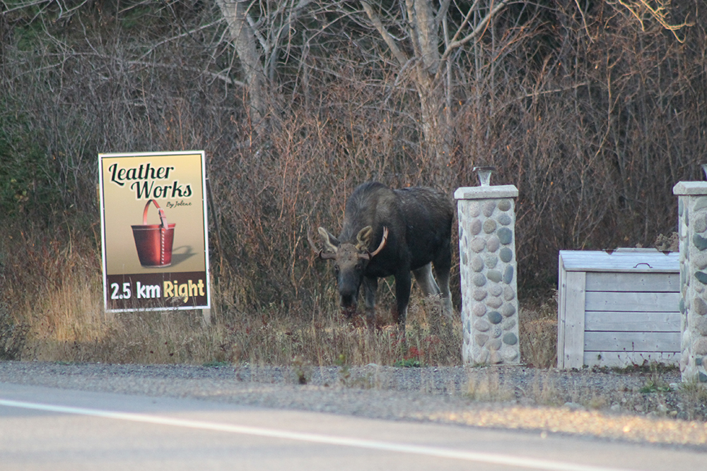 leatherworks moose.jpg