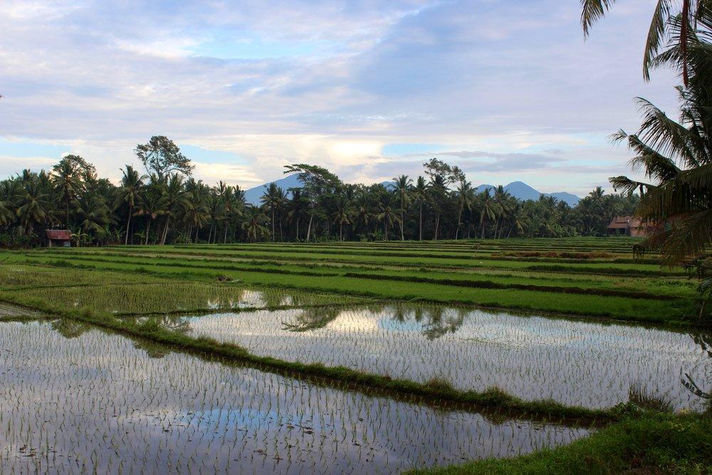 Bali wONEderlist Rice Paddies.jpg