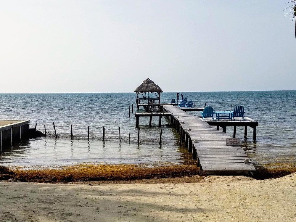 Docks and seaweed