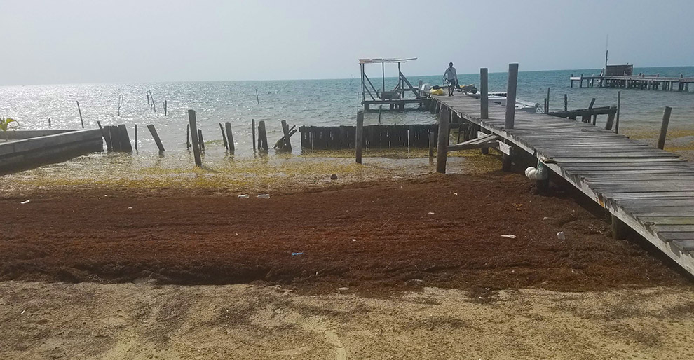 Welcome to paradise… and rotting seaweed