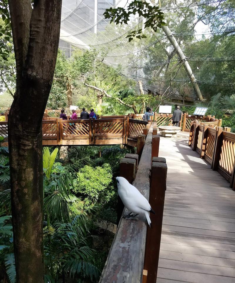 Bird aviary within Hong Kong Park