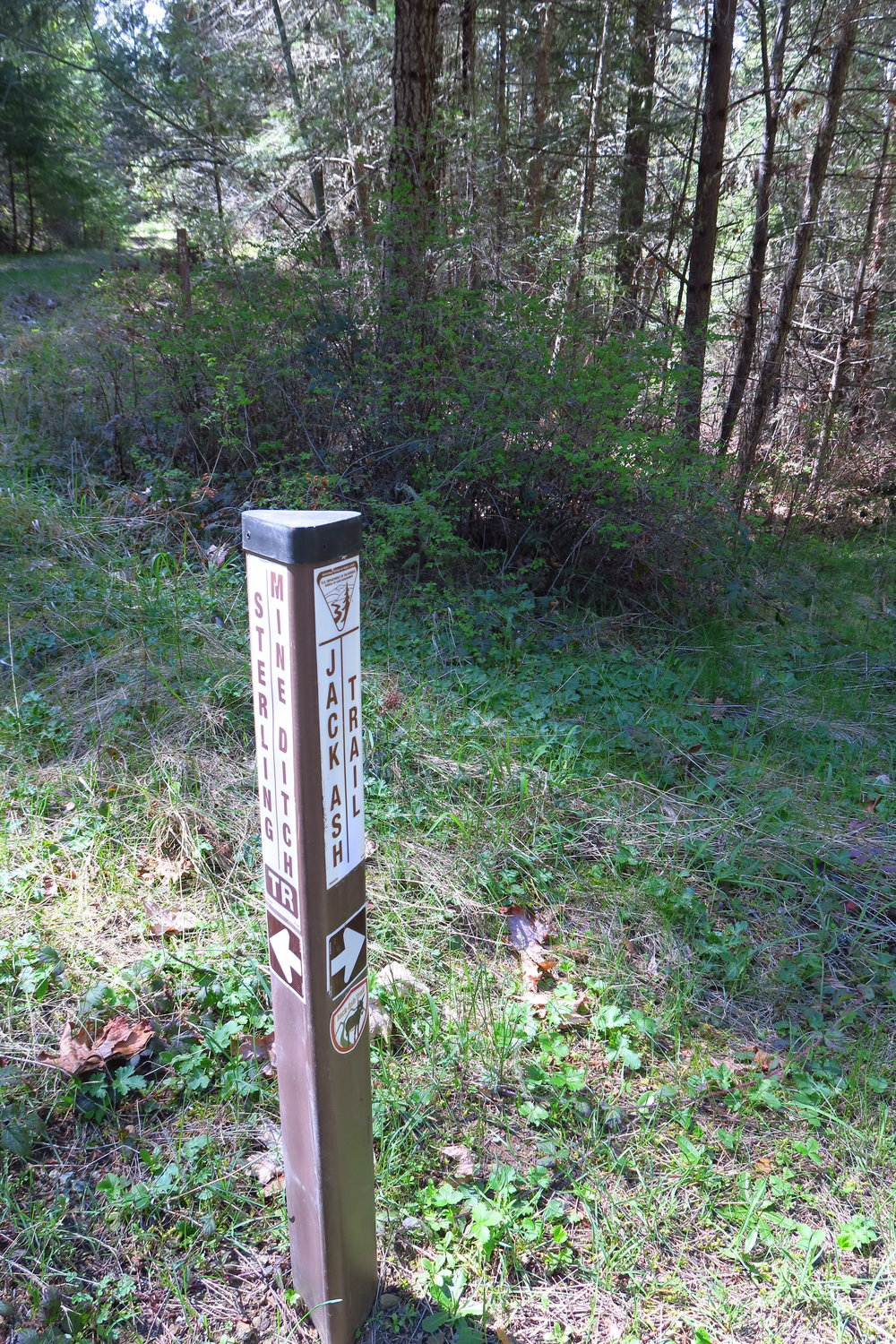 This trail marker is where the two routes diverge, the long route turns left to the SMDT and the short route goes right to continue on the Jack Ash.