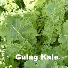 gulag kale.png