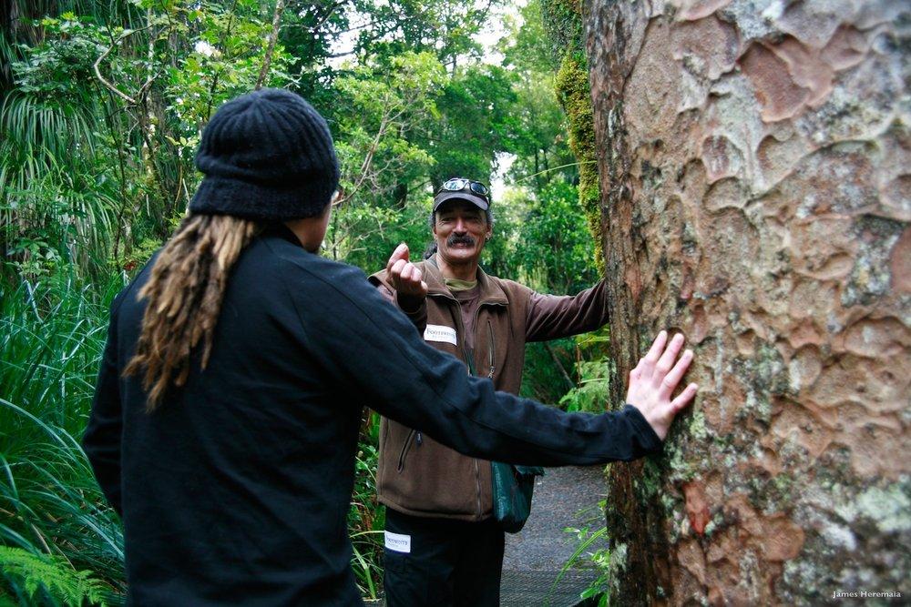 Waipoua Forest - SS Size.jpeg