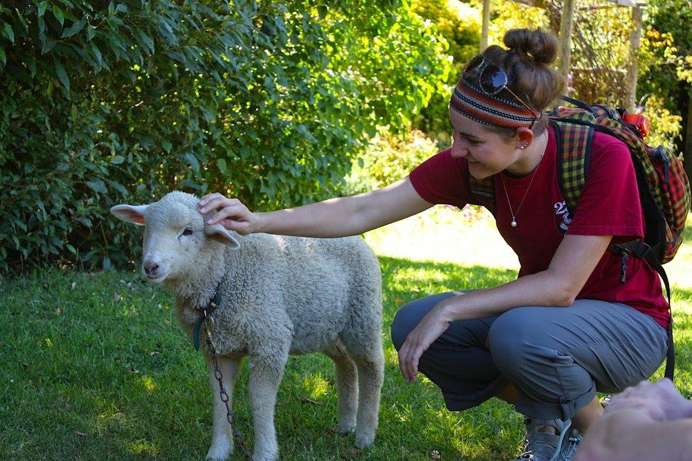Lamb Petting.JPG
