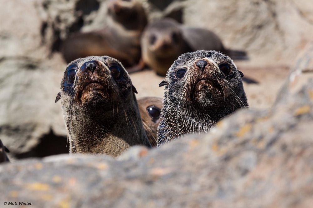Seals - SS Size.jpeg