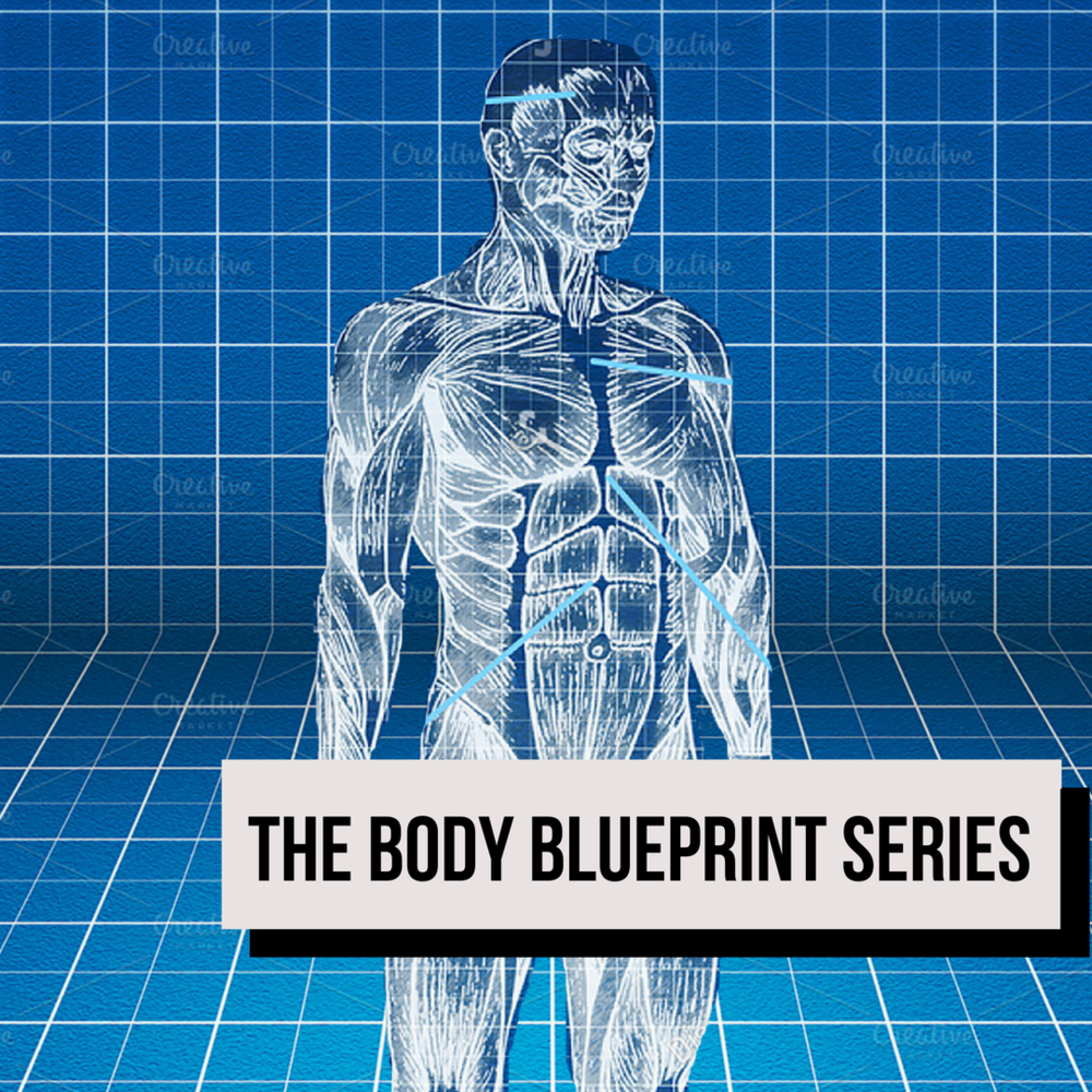 Body Blueprint Thumbnail.png