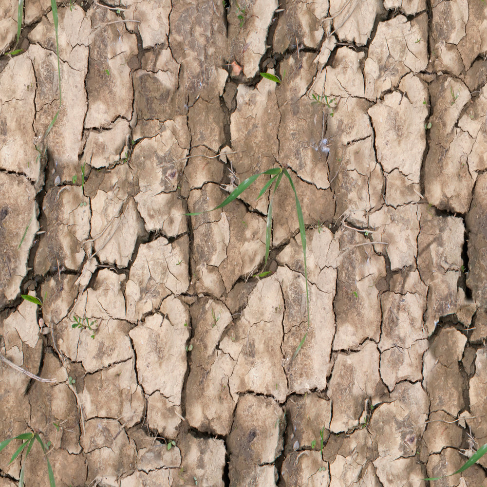 cracked-mud-with-grass.jpg