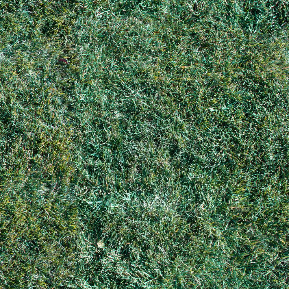 frozen-grass.jpg