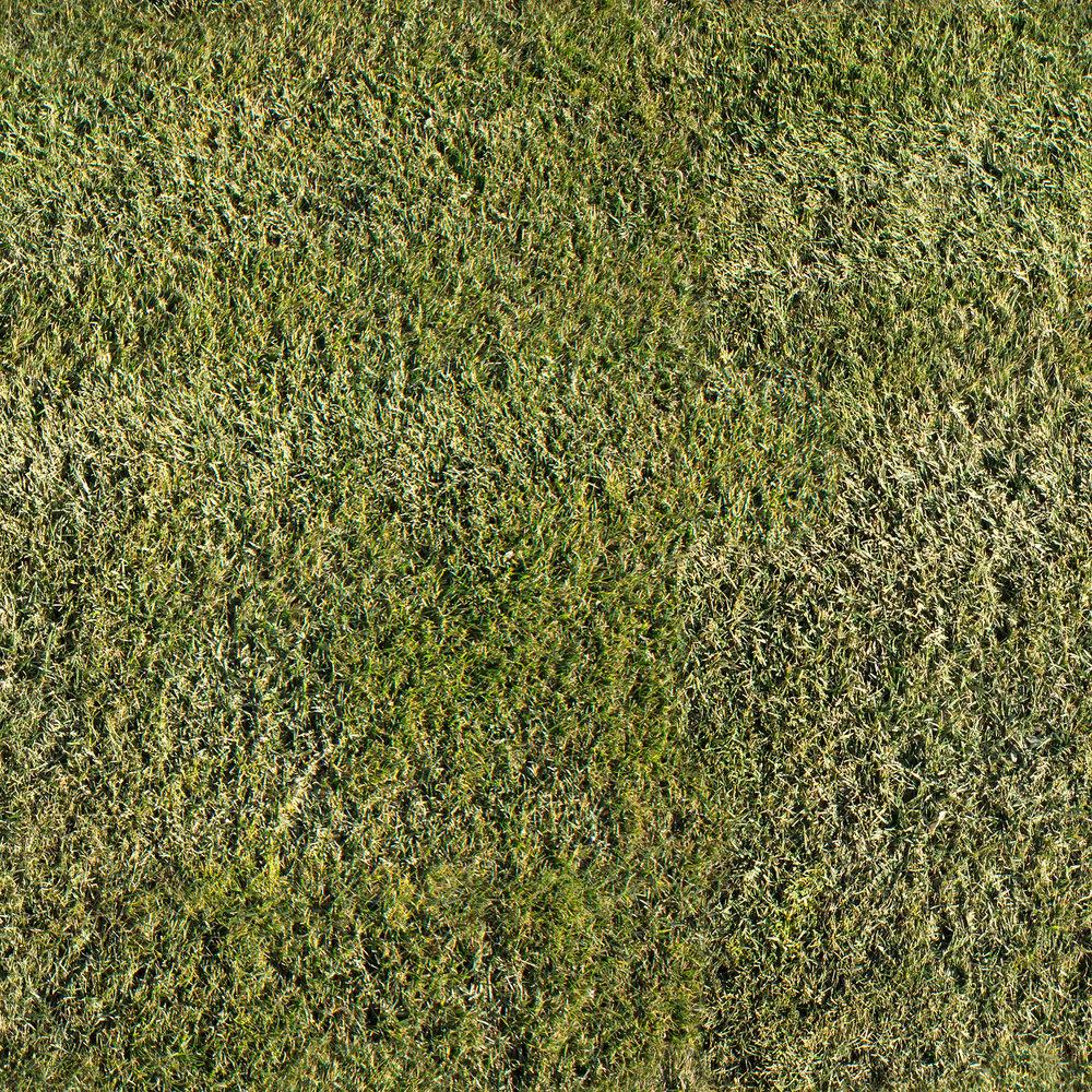 short-grass.jpg
