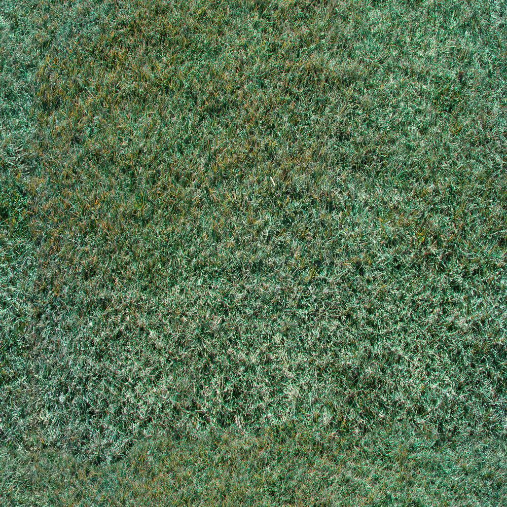 tufted-grass.jpg