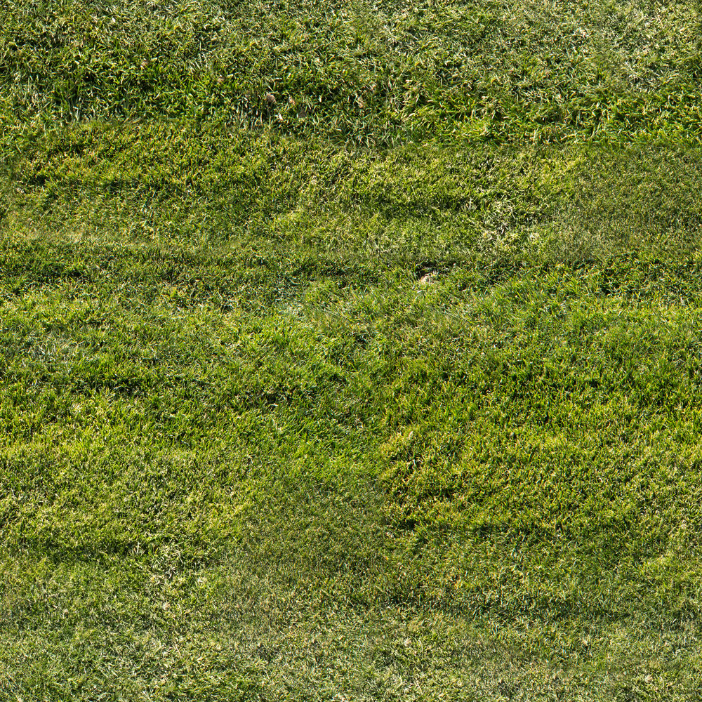 mowed-grass.jpg