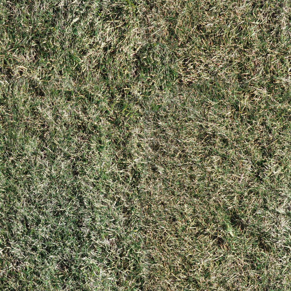 winter-grass.jpg