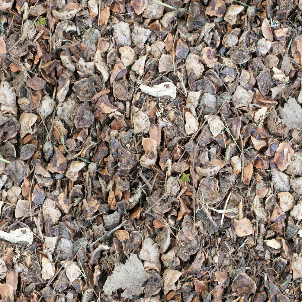 gravel-with-twigs.jpg