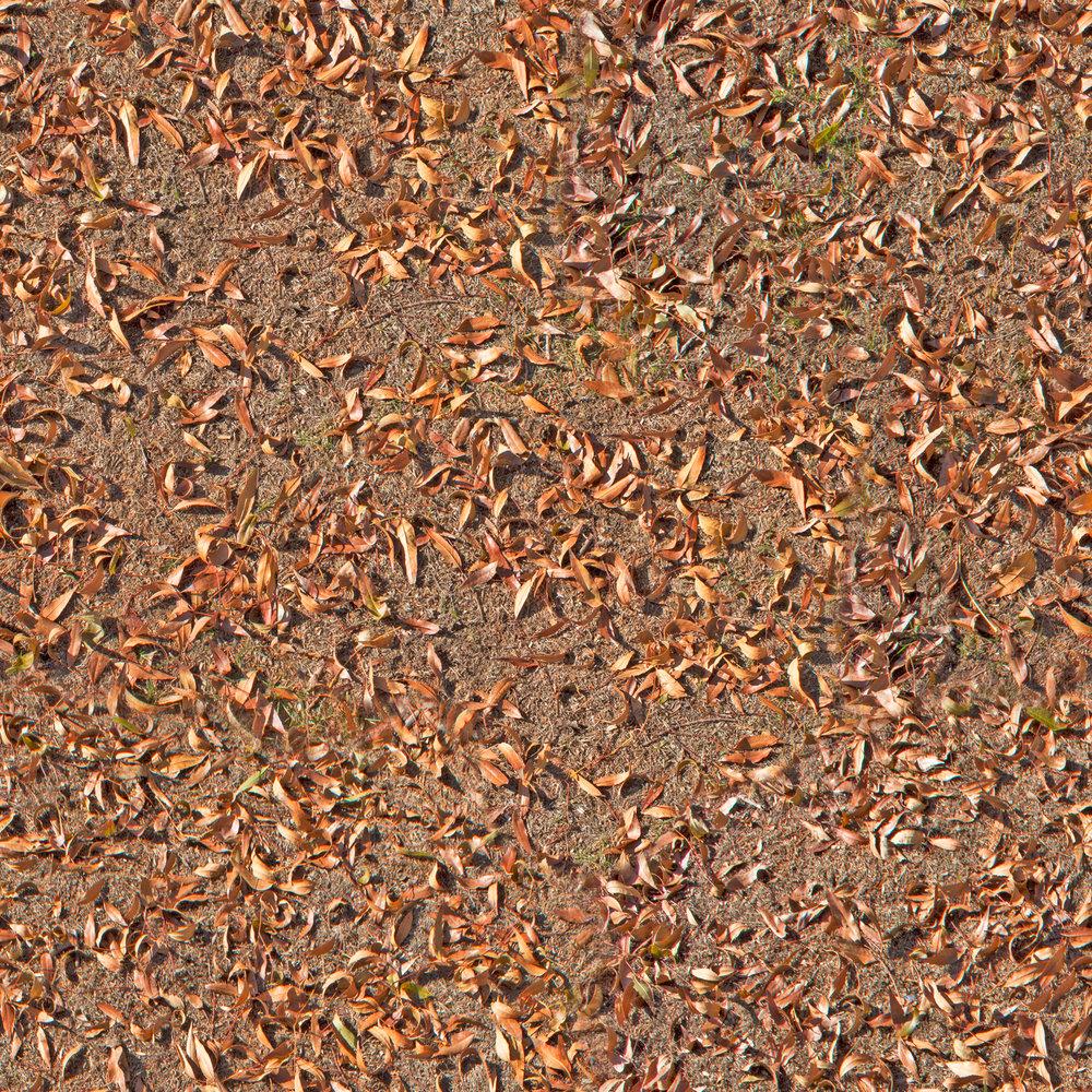 autumn-leaf-litter.jpg