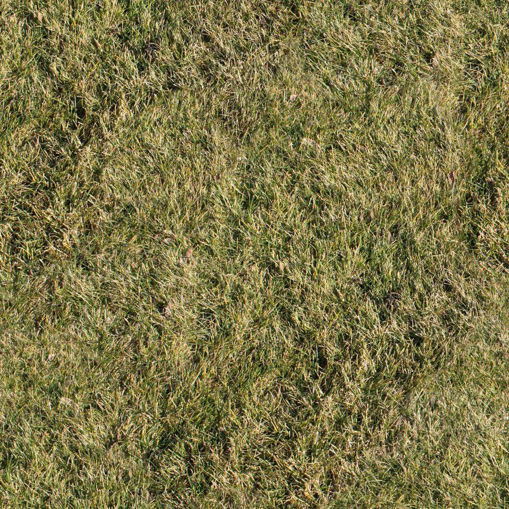 dry-grass.jpg