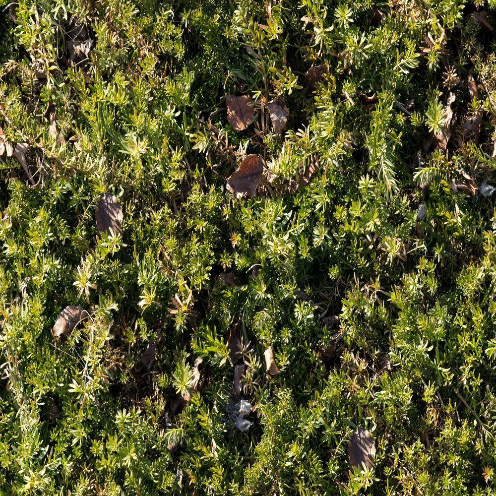 herbs-with-leaves.jpg