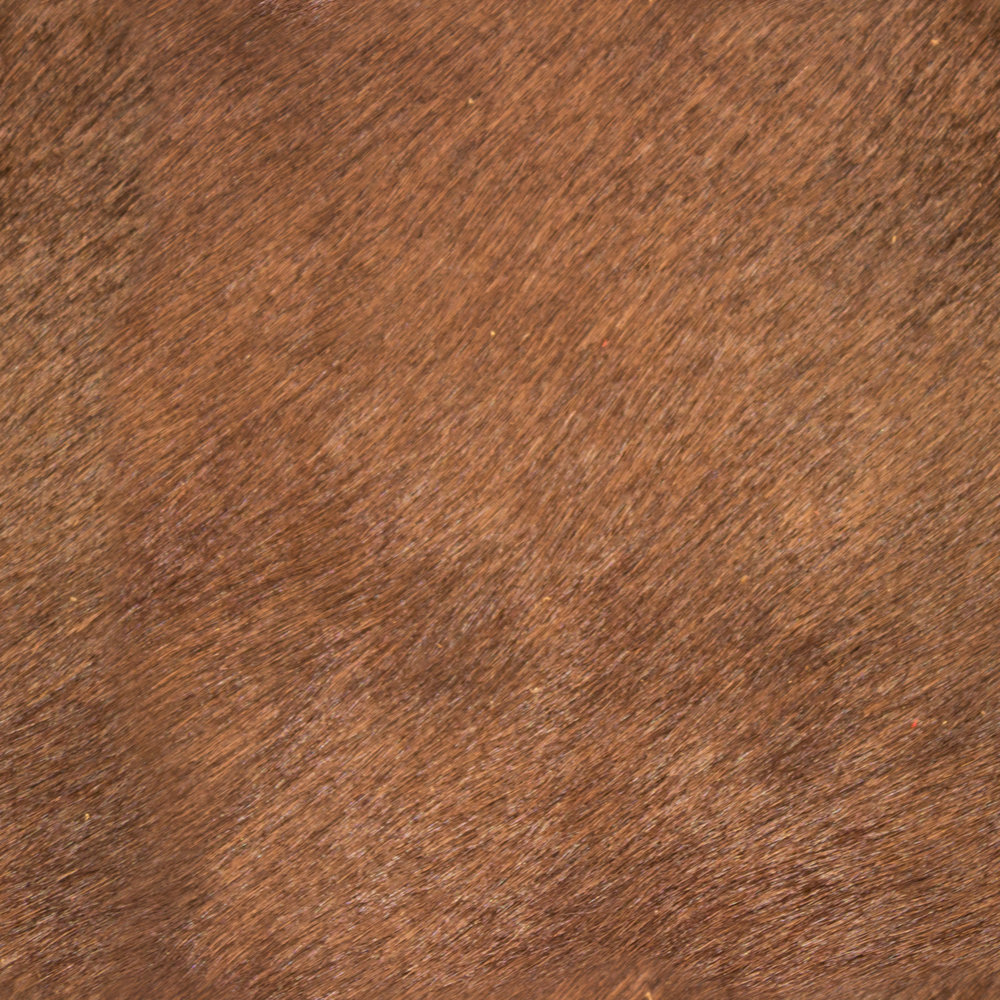 Coco Stained Leather.jpg