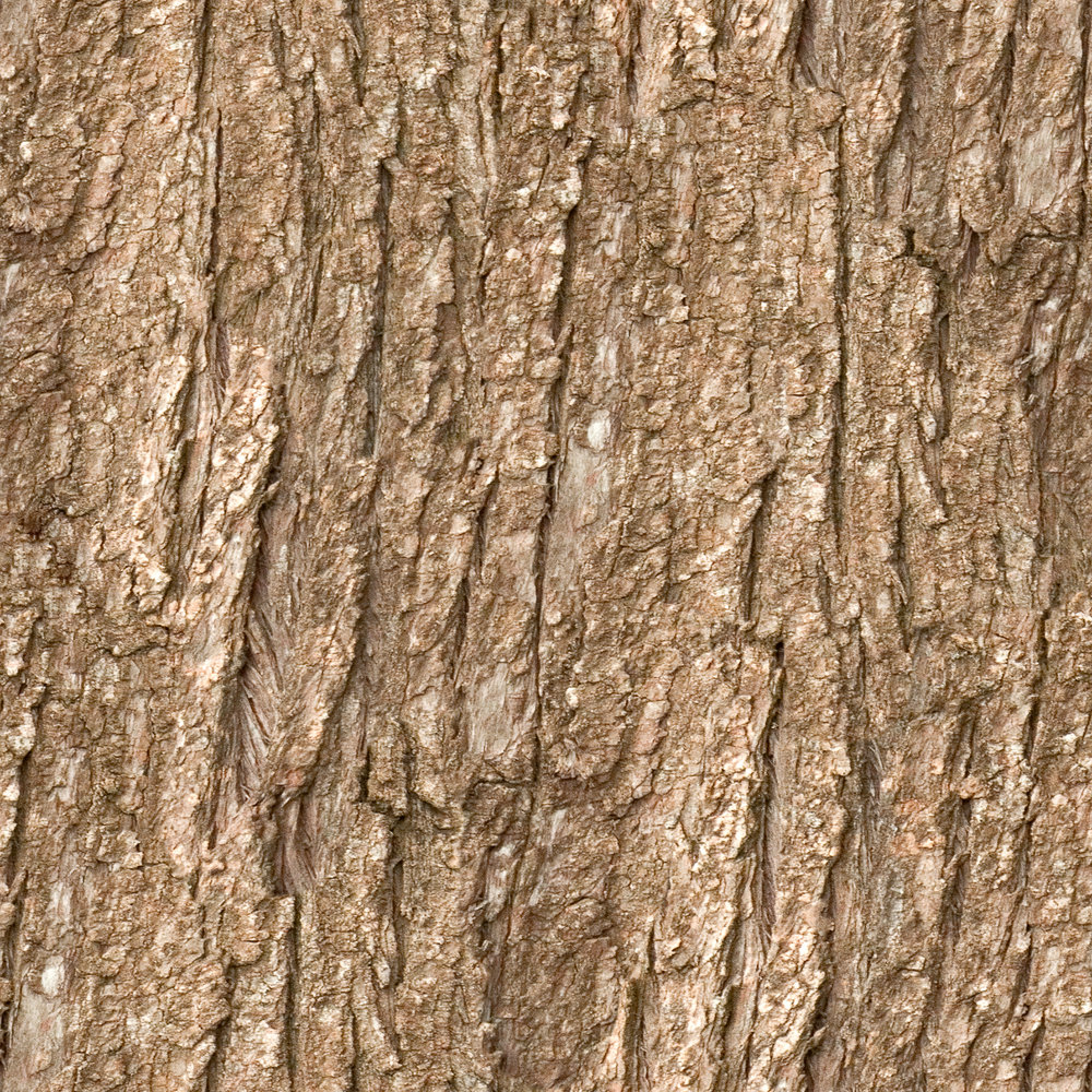 Brown Coarse Bark.jpg